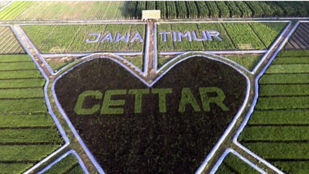 Image result for crop circle kediri